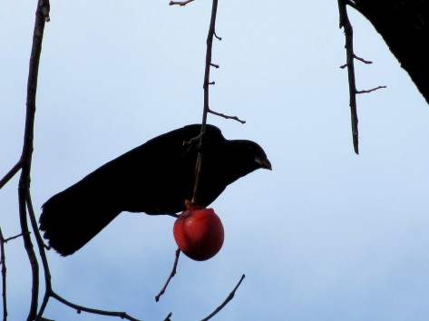 Crow In The Persimmon Tree #2