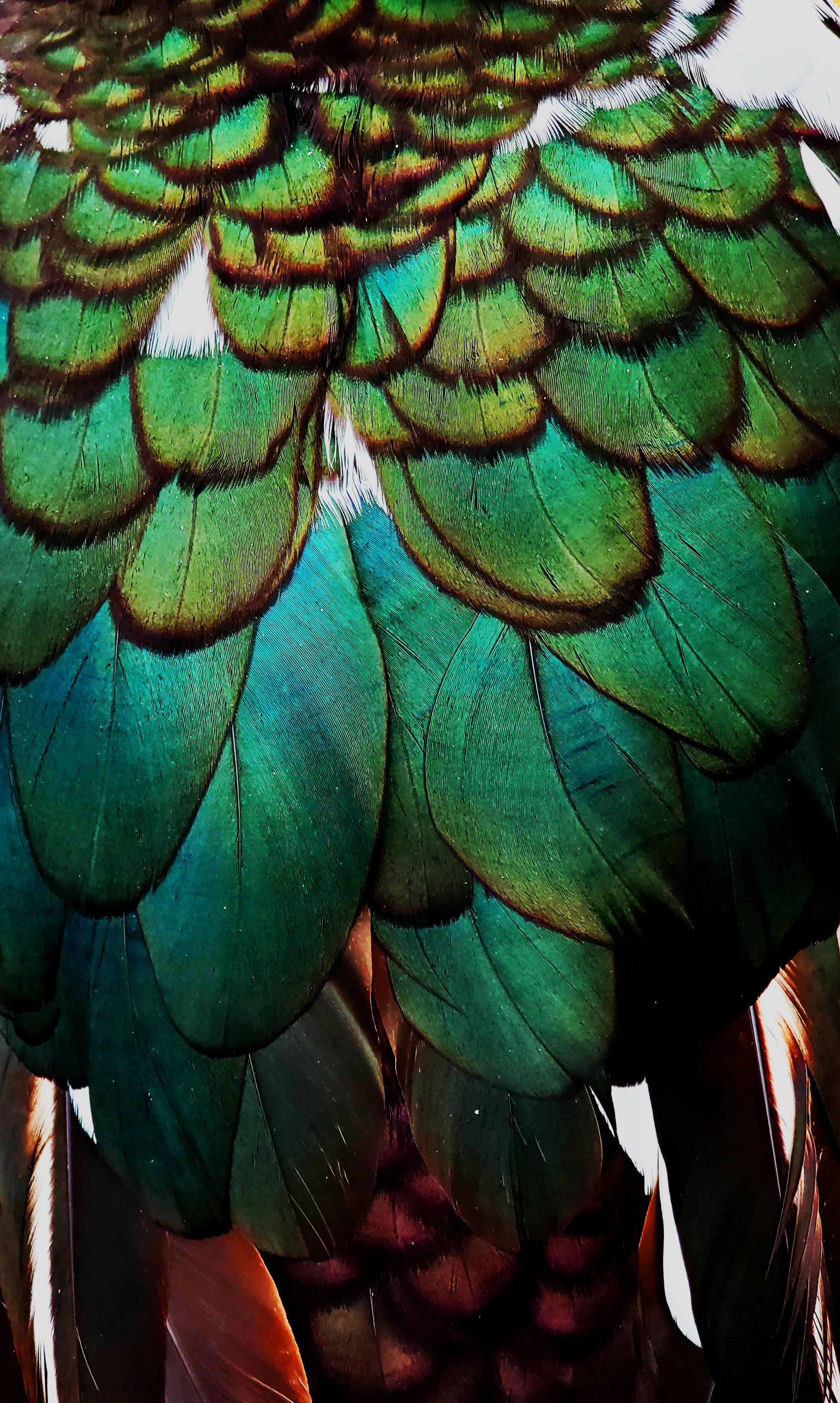 Art Nouveau Feathers